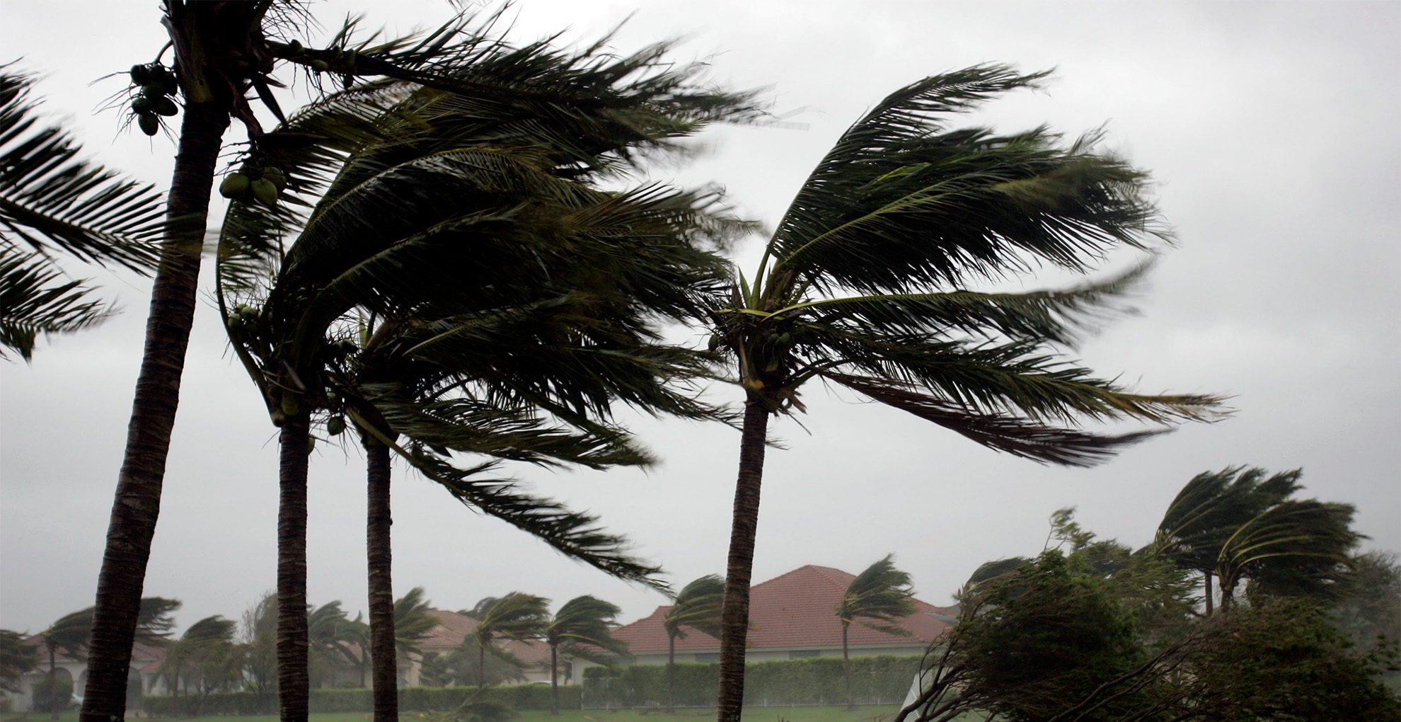 Hurricane-palmtree